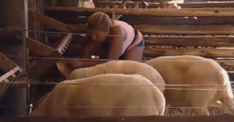 15.jul.2013 - Mulher Filé se enrola para cuidar das ovelhas e culpa os animais.