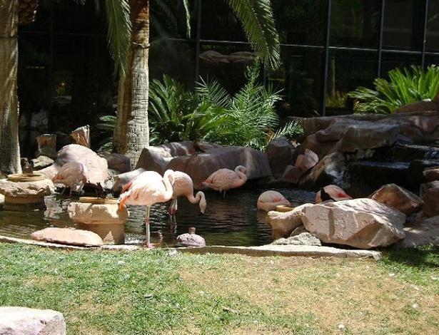 Reserva de flamingos, cisnes e carpas no Hotel Flamingo