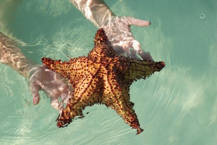 Estrela do mar viva em piscina natural localizada no caminho para a Ilha Saona; as embarcações turísticas param no local na ida ou volta do passeio