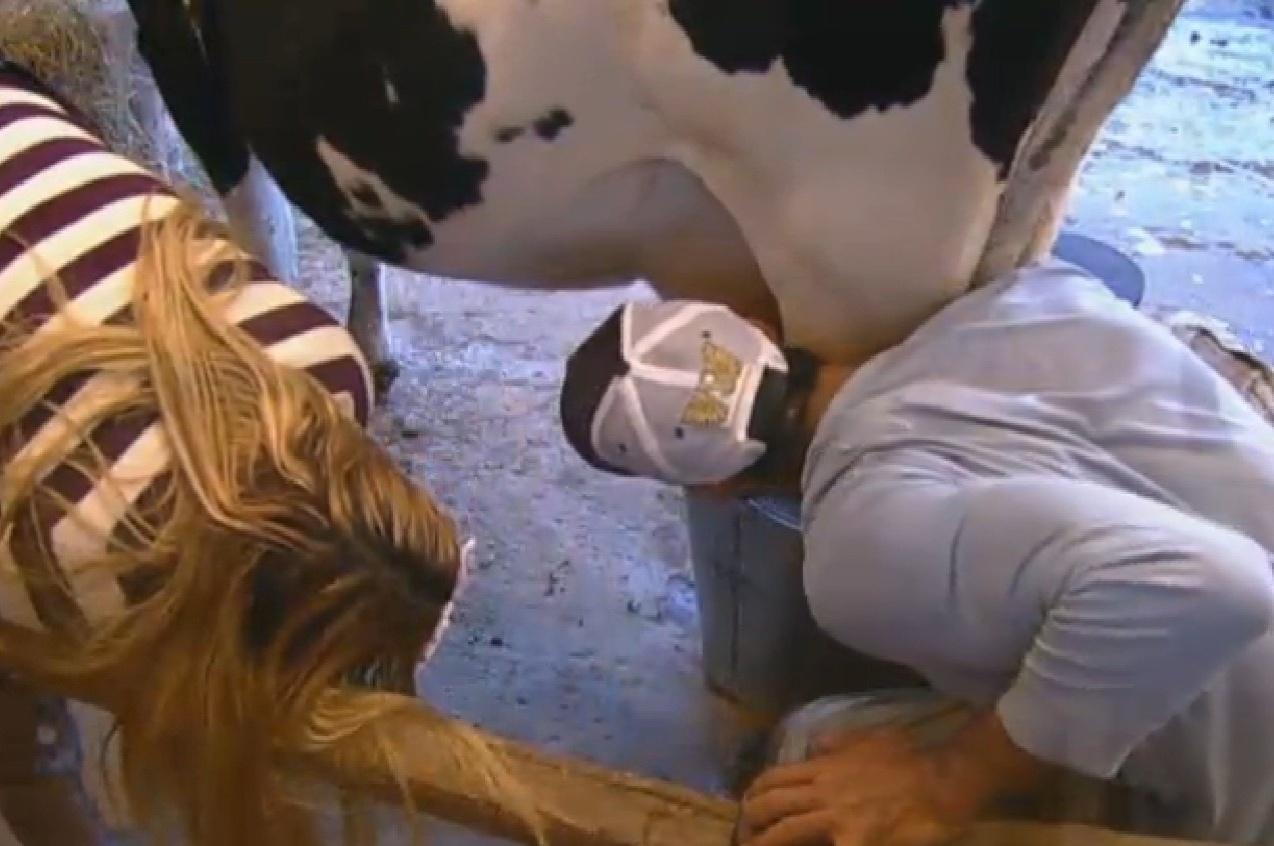 5.ago.2013 - Beto e Yani de Simone tomam leite direto na teta da vaca