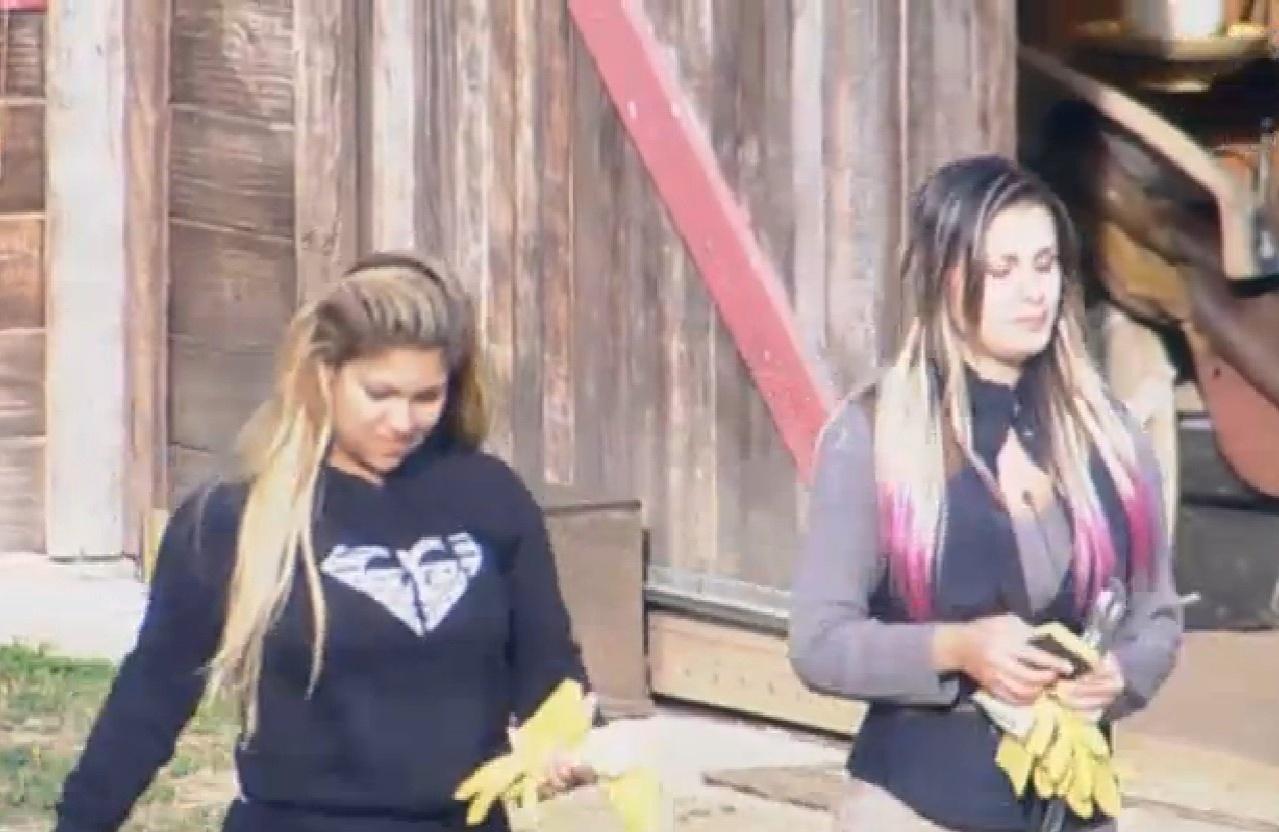 11.ago.2013 - Andressa e Yani saem da sede para cuidar das lhamas