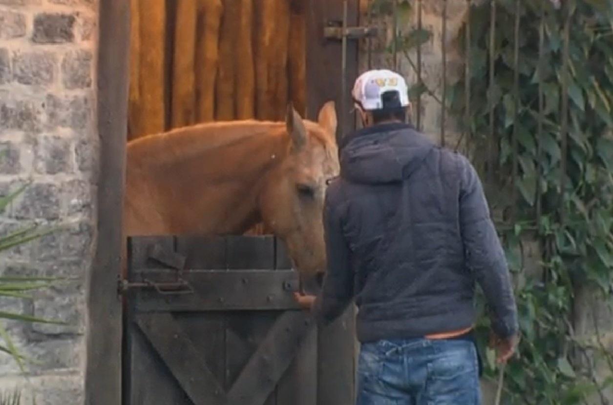 11.ago.213 - Beto faz carinho no cavalo Jano