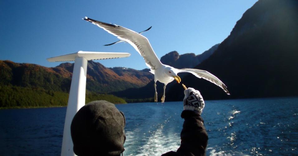 Durante a travessia dos lagos andinos, grupos de gaivotas costumam acompanhar os barcos que realizam esta viagem entre o Chile e a Argentina