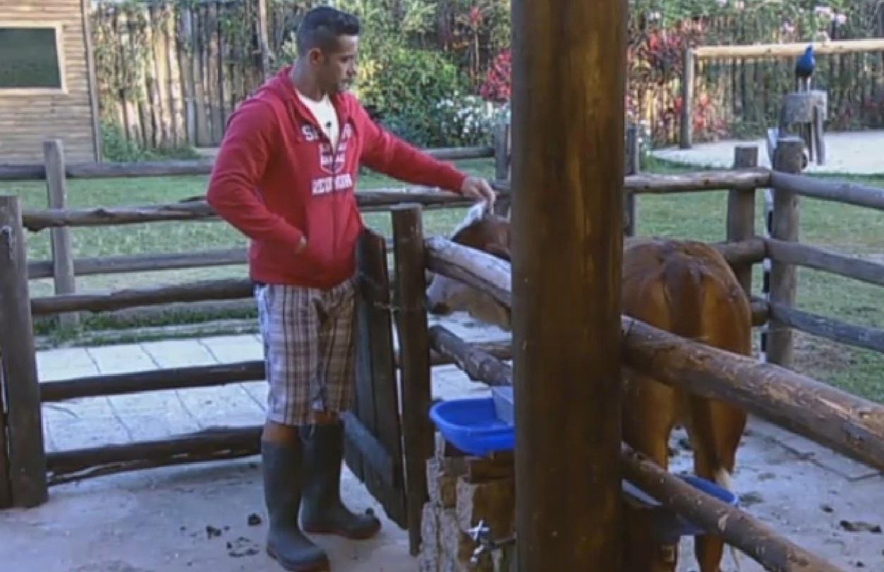 17.ago.2013 - Marcos Oliver brinca com o bezerro antes da ordenha da vaca