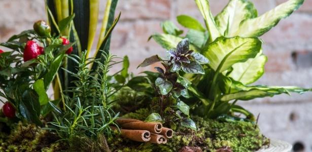 Espécies que compõem o vaso das sete ervas são tidas como plantas da sorte poderosas - Edna Froes/ Divulgação