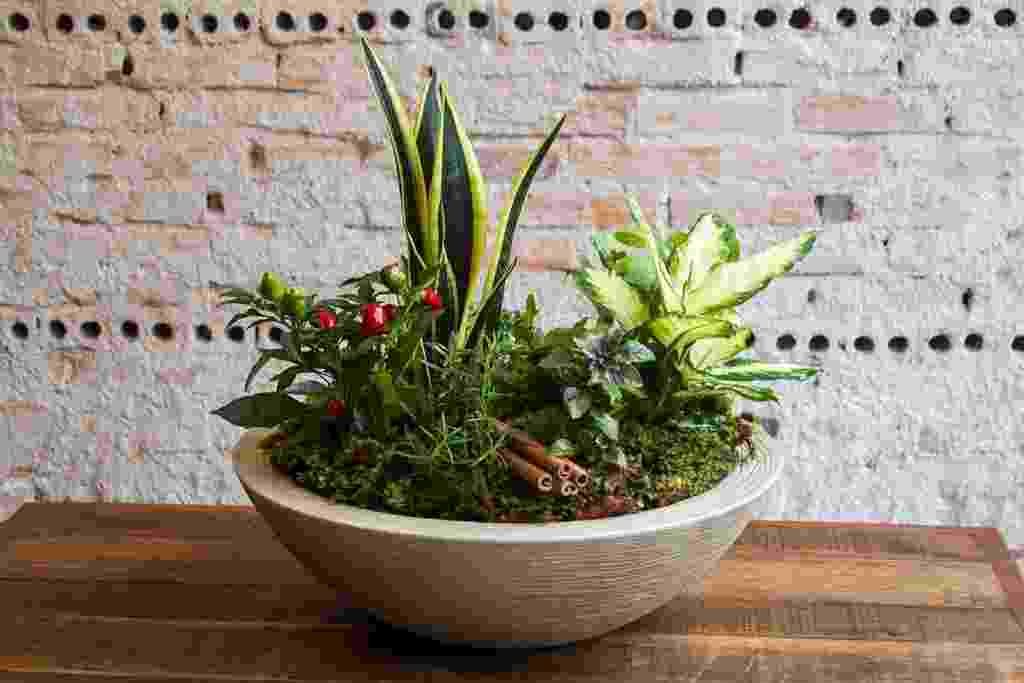 (imagem produzida/cedida com exclusividade para o UOL Casa e Decoração, usar apenas no respectivo material) arranjo sete ervas - Edna Froes/ Divulgação
