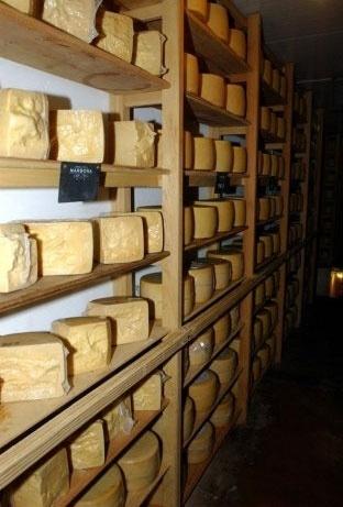 Também derivado do rebanho especial deste país, o queijo uruguaio possui um sabor único