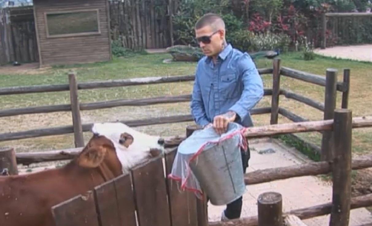 03.set.2013 - Mateus Verdelho cuidando da vaca