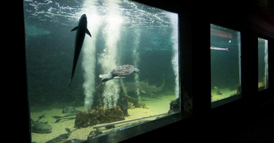 Aquário de Natal tem tanques gigantes onde ficam os peixes de grande porte