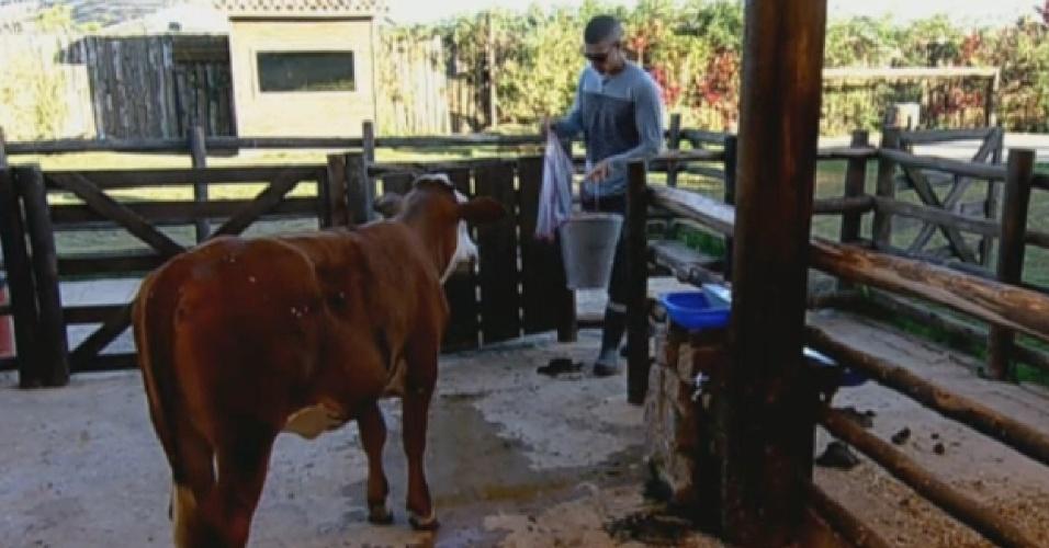 6.set.2013 - Mateus Verdelho cuidou da vaca, pela manhã