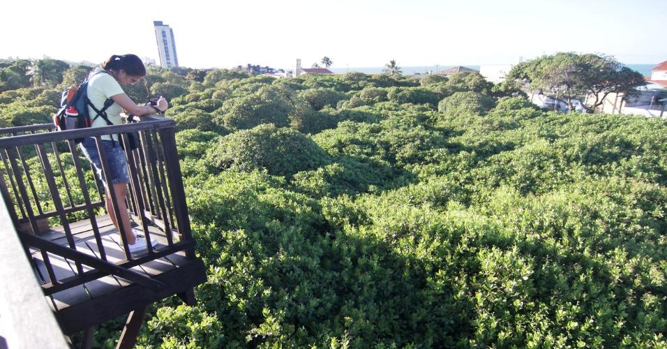 Parece um bosque, mas é a copa do maior cajueiro do mundo. De um mirante, turista pode enxergar toda a extensão da árvore gigante que não para de crescer e avança sobre ruas