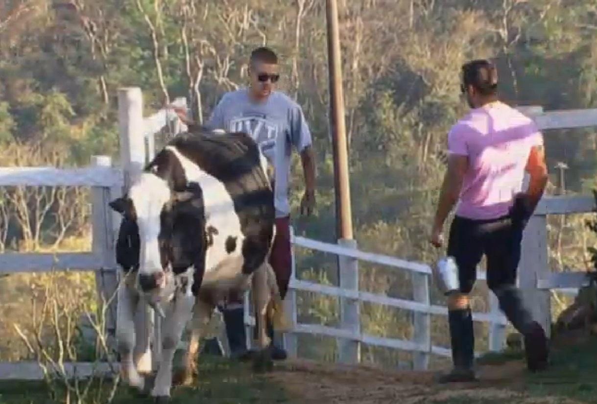 8.set.2013 - Pela terceira semana seguida, tarefa do DJ Mateus é cuidar das vacas