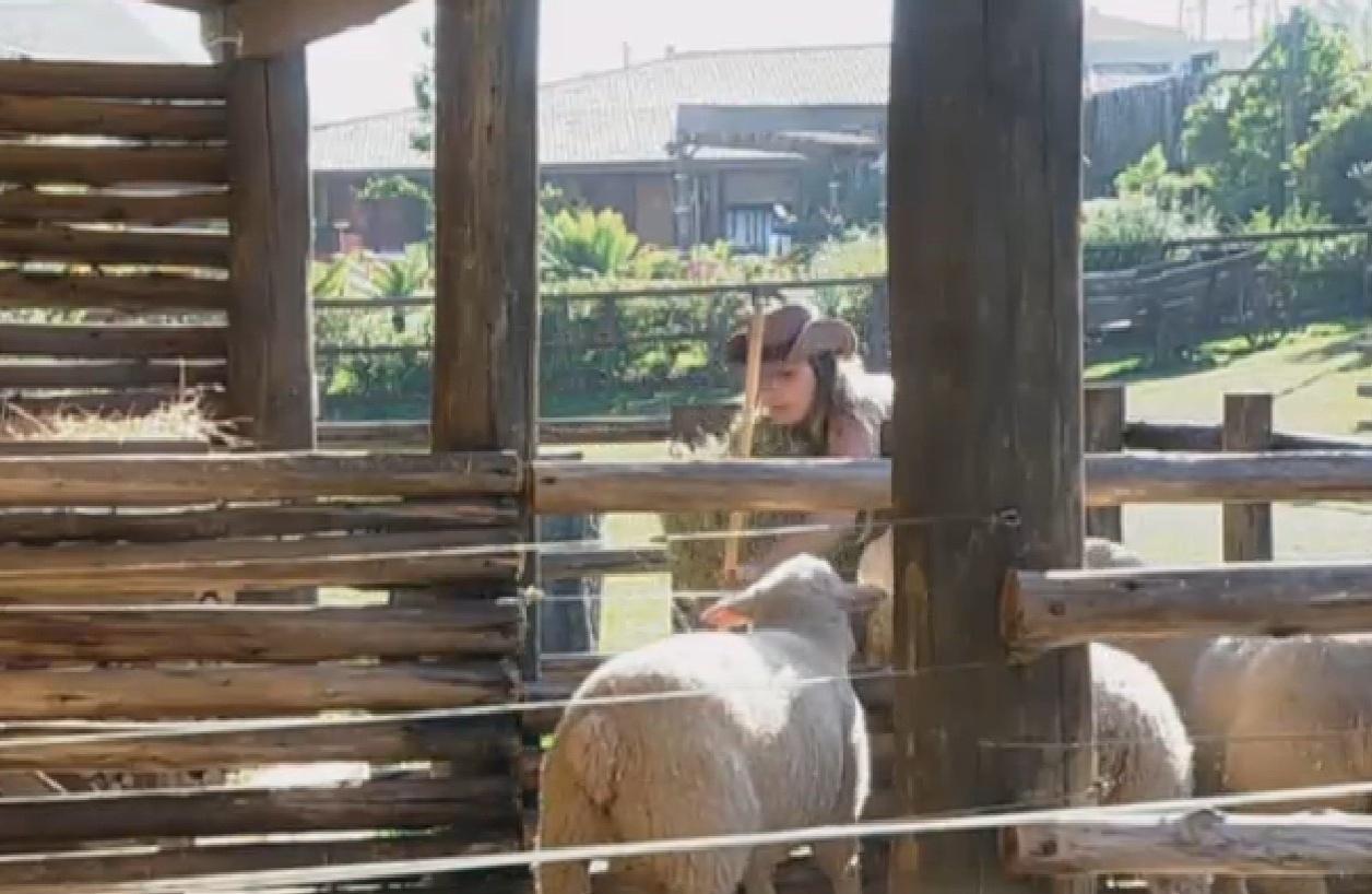 10.set.2013 - Andressa Urach cuidou das ovelhas na manhã desta terça