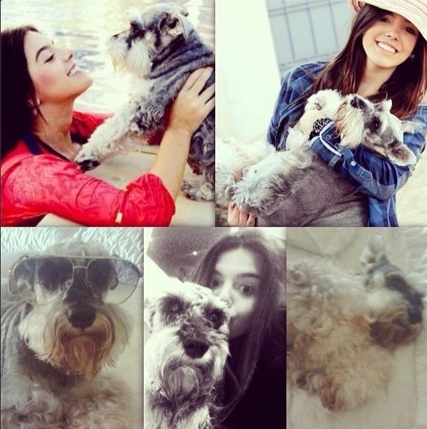 13.set.2013- Recentemente a atriz publicou uma montagem com fotos da cadelinha Sandy, que morreu aos 13 anos: