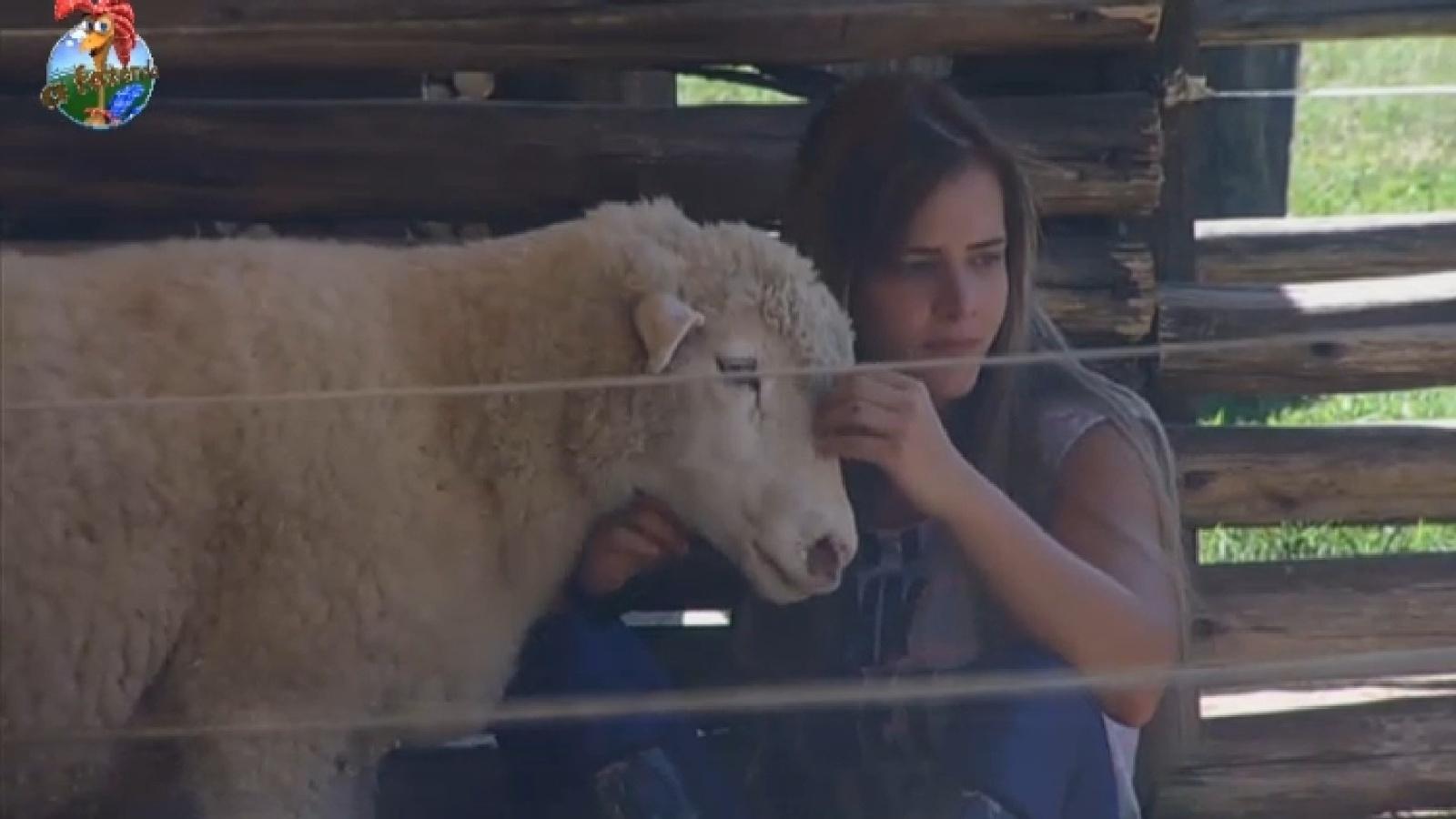 14.set.2013 - Denise brinca com ovelha na manhã deste sábado