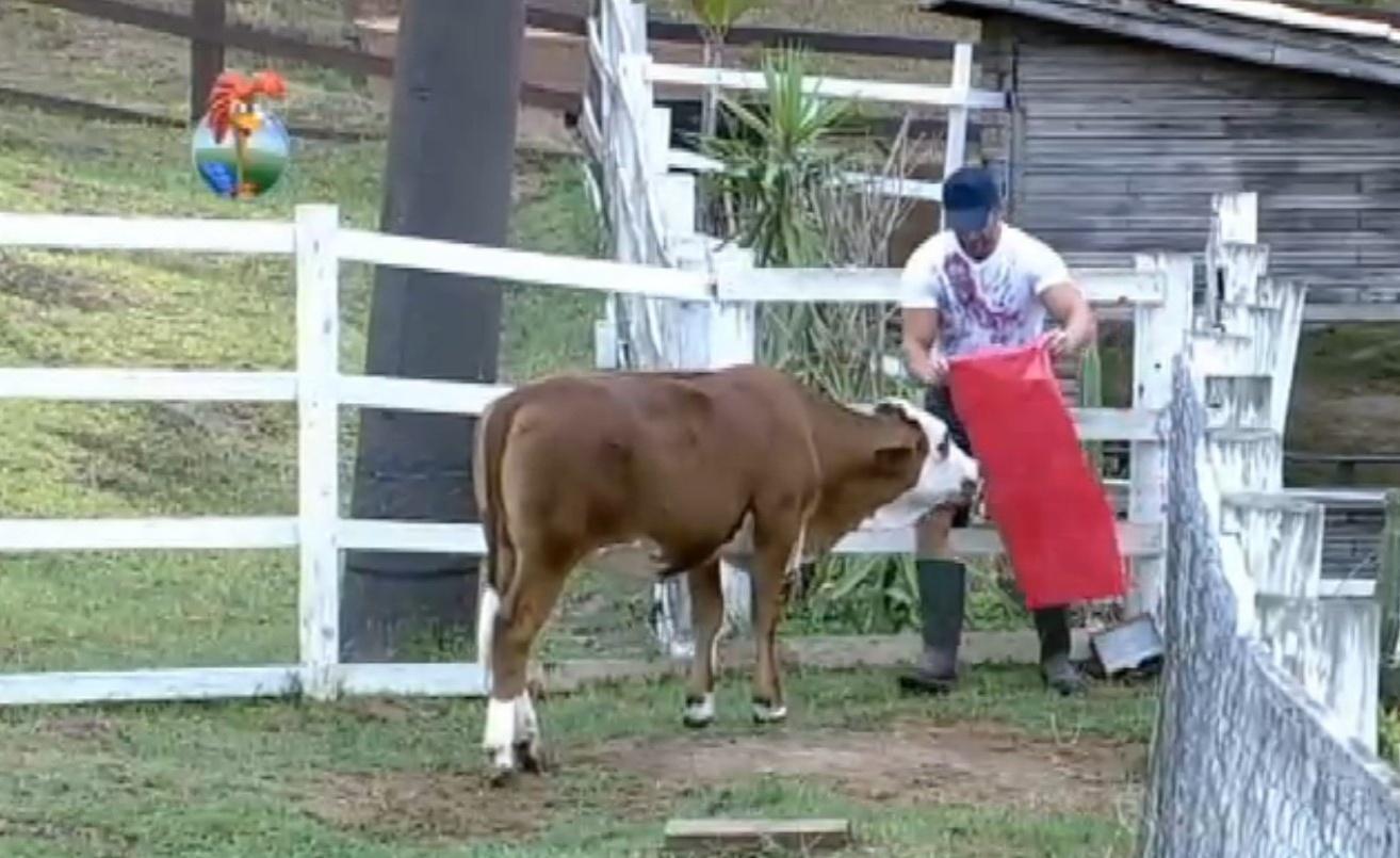 18.set.2013 - Oliver brincou com a vaca