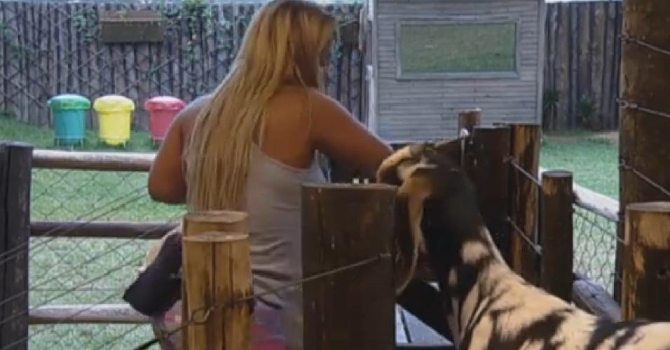 19.set.2013 - Mulher Filé alimentou e tirou leite das cabras