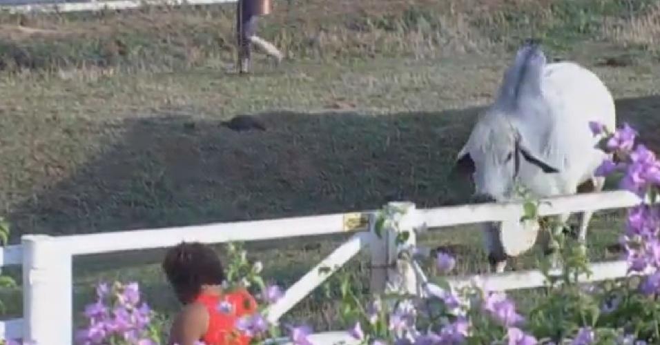 20.set.2013 - Com medo, Gominho pediu que boi Rubinho se afastasse dele
