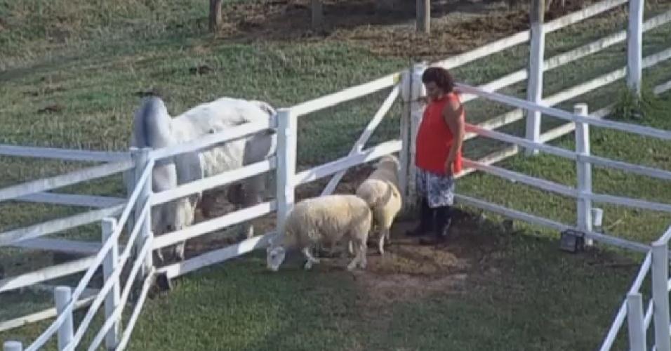 20.set.2013 - Gominho cuidou das ovelhas