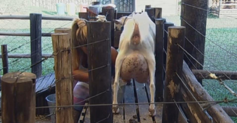 20.set.2013 - Yani de Simone tirou  leite das cabras