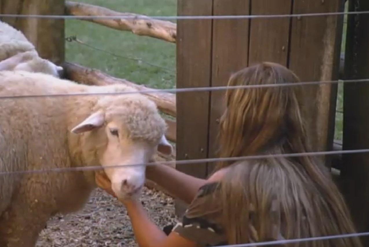 22.set.2013 - Isolada, Denise Rocha brinca com as ovelhas