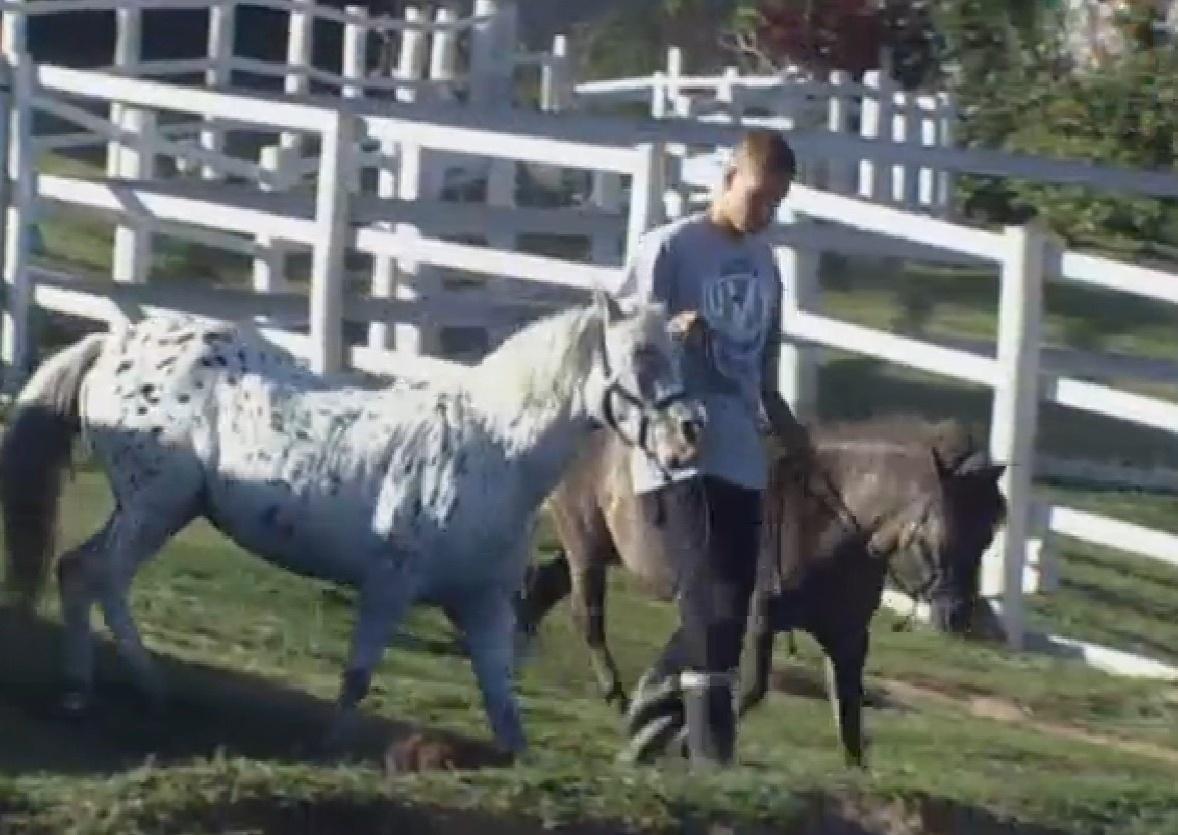 26.set.2013 - Depois de cuidar das lhamas, Mateus cuidou dos cavalos e pôneis da Fazenda