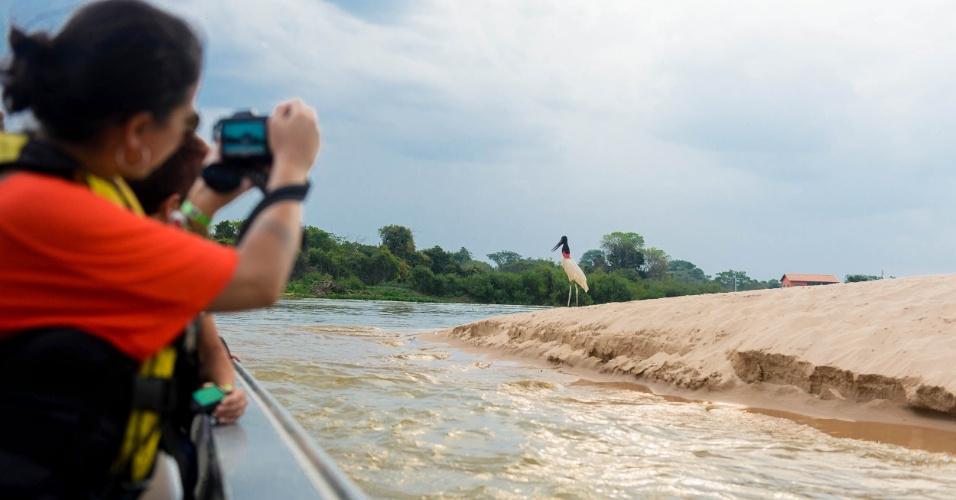 Turistas em passeio de barco admiram o Tuiuiú, ave símbolo do Pantanal