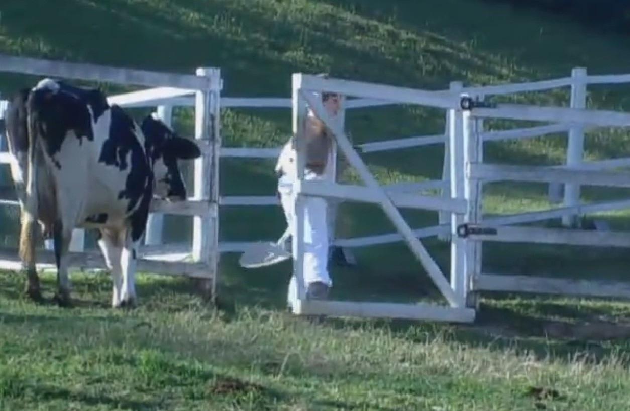28.set.2013 - Bárbara Evans correu da vaca logo pela manhã