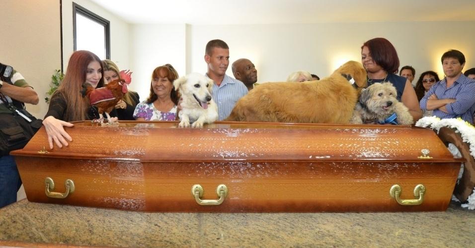 1.out.2013 - O galo Paquito Fred e alguns cachorros se despedem do ator Claudio Cavalcanti em cima do caixão do ator