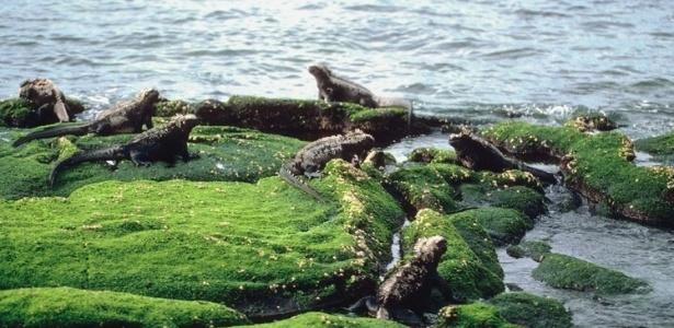 Galápagos (Equador): O destino é habitat de diversas aves, mamíferos e repteis que só podem ser encontrados lá, como tartarugas, iguanas, leões marinhos e pinguins