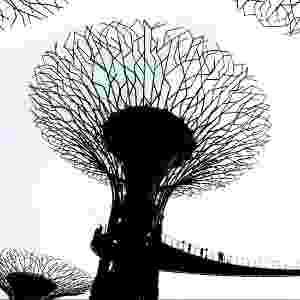 Esta foto de árvores de metal no projeto Jardins na Baía, em Cingapura, foi feita por Mukesh Dolia - Mukesh Dolia