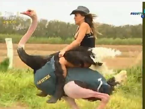 A japa já participou de uma corrida de avestruz durante o