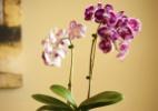 Veja como manter as plantas bem cuidadas mesmo estando fora de casa - Getty Images