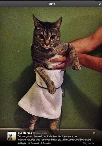 """12.jan.2014 - Internauta brasileiro publica foto de gato enrolado em toalha para imitar o vestido de Jennifer Lawrence. """"O Link gostou tanto do vestido da Jennifer Lawrence que resolveu imitar"""", escreveu na legenda da imagem"""