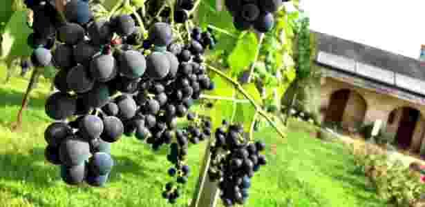 A época da vindima, a festa da colheita, é uma prato cheio para quem quer unir a visitação a uma das áreas mais bonitas do Rio Grande do Sul com a oportunidade de degustar os mais diversos tipos de vinho - Marcel Vincenti/UOL