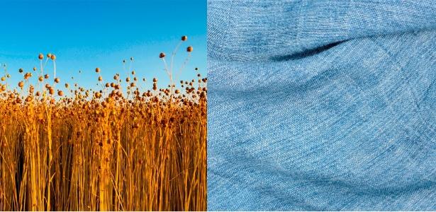 O linho é extraído do caule da planta de mesmo nome, a mesma que produz as sementes de linhaça  - Thinkstock