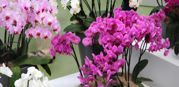 Entre as flores plantadas em vasos, as orquídeas são boas opções para decorar ambientes internos - Getty Images
