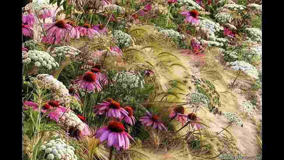 O International Garden Photographer of the Year, principal concurso internacional de fotografia de jardins, está exibindo os vencedores de sua sétima edição em uma mostra no Kew Gardens, o Jardim Botânico de Londres - Rosanna Castrini/Igpoty