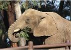 Zoológico nos EUA vai construir 'spa' para elefantes gordinhos; veja fotos