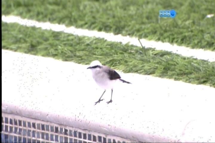 25.fev.2014 - Diego observa um pássaro branco que visita o jardim do confinamento
