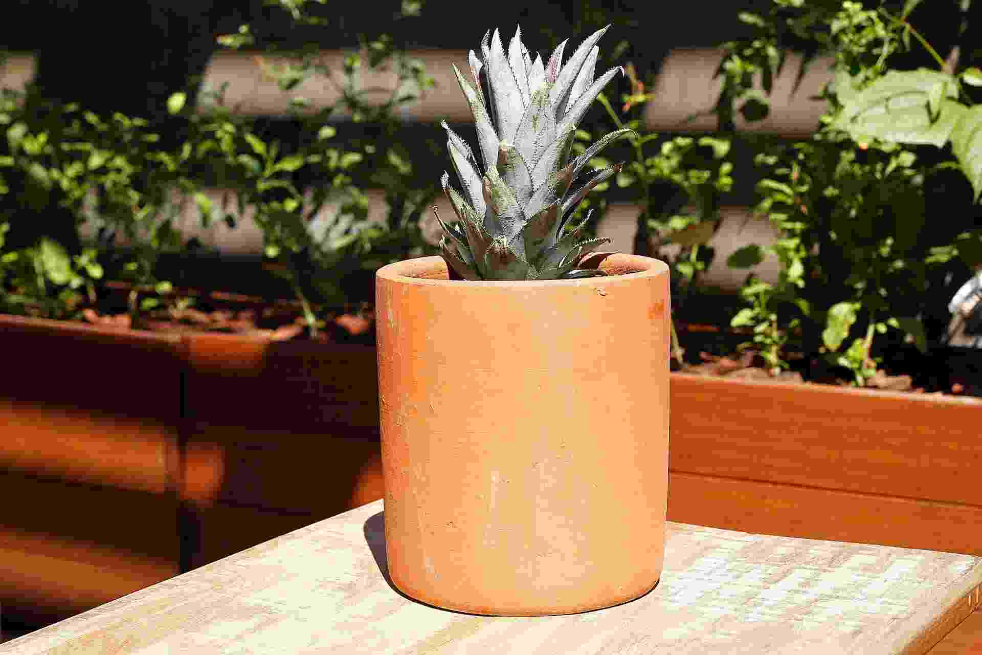 Passo a passo ensina como plantar abacaxi em vaso - Reinaldo Canato/ UOL