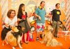 'Cãocurso' reúne cachorros com fantasias de Carnaval em SP