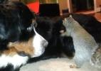 Esquilo tenta esconder noz no pelo de cão; veja vídeos divertidos de bichos