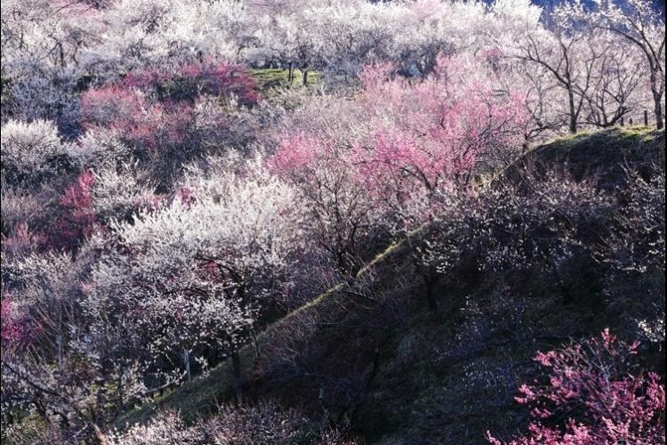 Esta foto das flores surgindo na primavera japonesa foi feita por Hideyuki Katagiri. As inscrições ao concurso National Geographic Traveler estarão abertas até 30 de junho