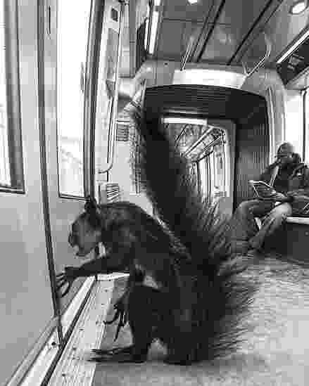 A exposição Animétro, apresentada na Millésime Gallery, em Paris, reúne fotomontagens de animais selvagens no metrô da capital francesa - Clarisse Rebotier e Thomas Subti