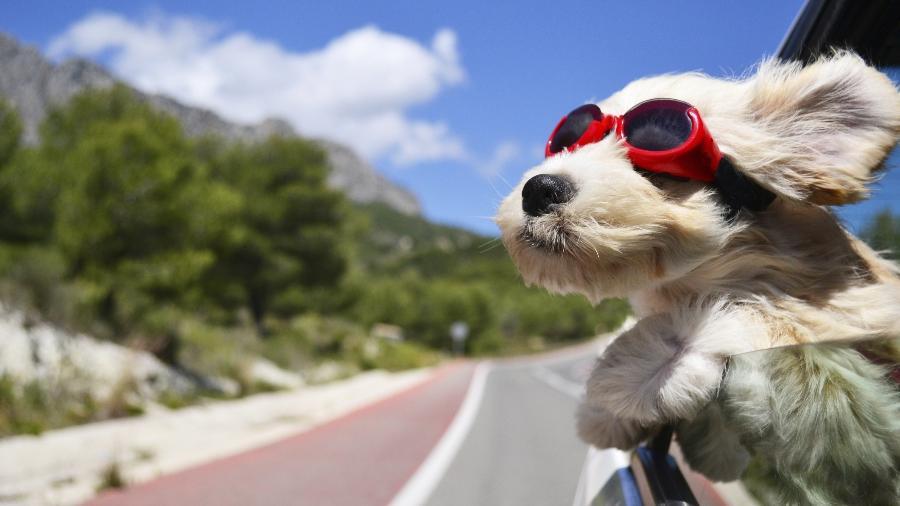Já é possível embarcar com o seu cãozinho para as férias na Ìndia - Getty Images/iStockphoto