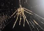 Aranhas constroem versões gigantes de si mesmas como forma de proteção