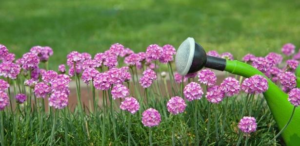 Em clima frio e seco, a rega não precisa ser maior, mas o ideal é aguar as plantas na parte da manhã - Getty Images