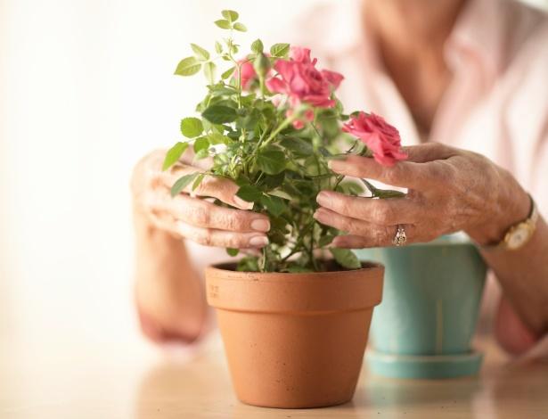 Rosas variadas podem ser cultivadas em vaso, mas não toleram compartilhar o espaço com outras plantas - Getty Images