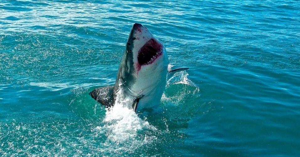 Tubarão branco é fotografado na superfície no mar durante tour pela região da Cidade do Cabo, na África do Sul